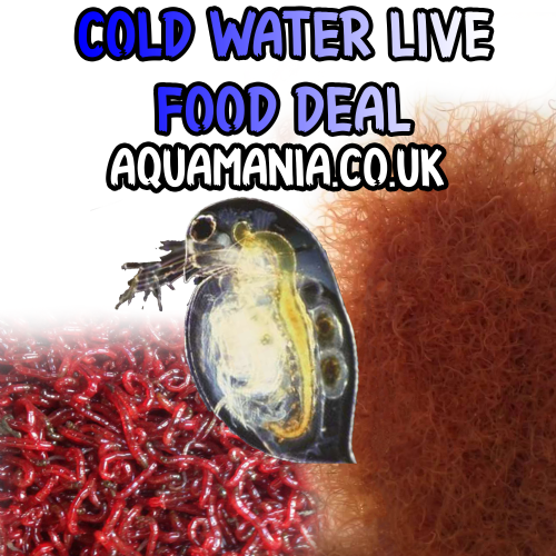 Cold Water Live Foods Deal